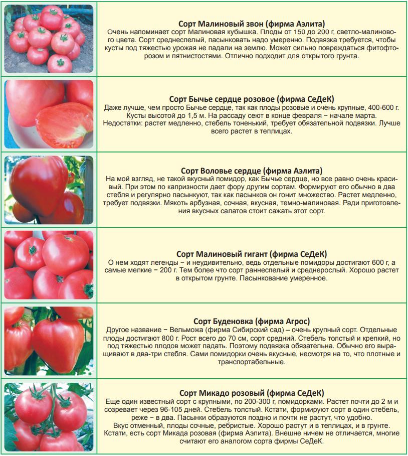 Сорта помидоров, которые обязательно надо посадить в новом году