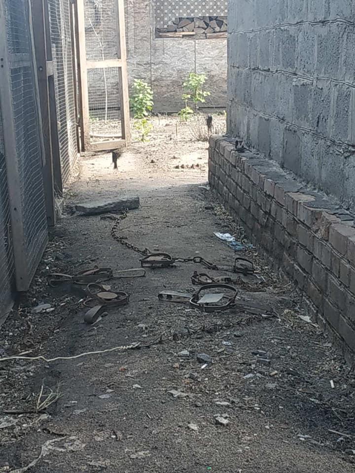 У Сумах чоловік вбив сусідську кішку на очах її власниці